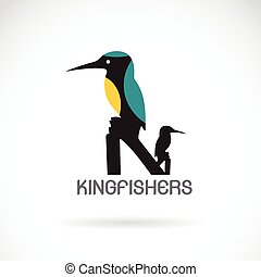 Vector of a kingfishers (Alcedo atthis) on white background. Bird Design.