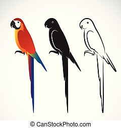 Vector of a parrot (Macaws) on white background. Wild Animal. Bird Design.