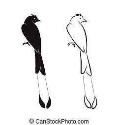 Vector of bird on white background.(Greater Racket-tailed Drongo; Dicrurus paradiseus)