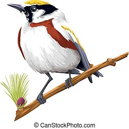 Vector of bird perching on branch.