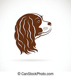 Vector of Cavalier King Charles Spaniel dog on white...