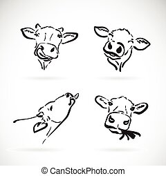 Vector of cow head on white background. Farm Animal.