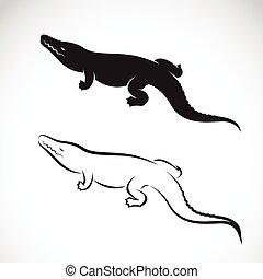 Vector of crocodile design on white background. Vector crocodile for your design.