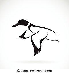Vector of flying wild duck design on white background.