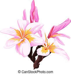 Vector of fresh pink flower.