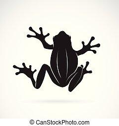 Vector of frog design on white background. Amphibian....