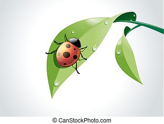 Vector of ladybug on green leaf.