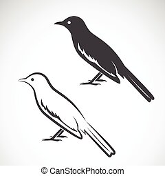 Vector of magpie design on white background. Bird Icon. Vector illustration.