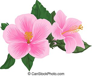 Vector of pink flower.