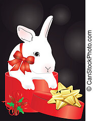 rabbit in the red box