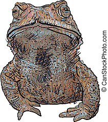 Vector of toad isolate on white background