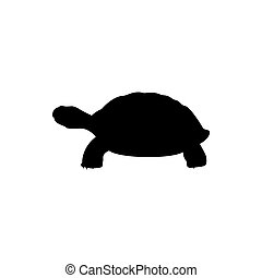 Vector of turtle design on a white background