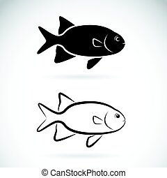 Vector of two fish on white background.