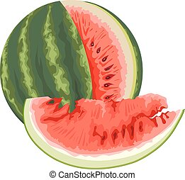 Vector of watermelon.