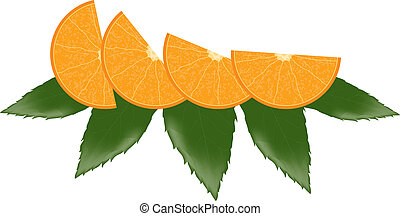 vector orange slices and leaves
