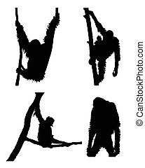 Vector orangutan collection in different positions on white background.