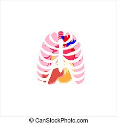 vector, organen, menselijk