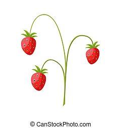 vector, ouderwetse , wild, illustratie, strawberries., struik