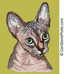 Colorful Sphynx Cat