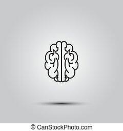 human brain on white