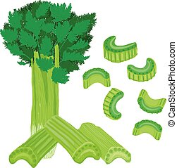 Vector painterly celery set editable, scalable illustration....