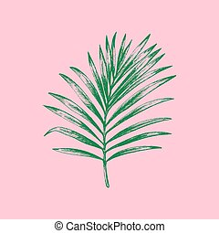 Vector palm leaf illustration on pink background. Hand sketch.
