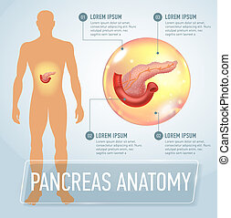 Infographic poster with pancreas illustration and medical icons. Realistic vector illustration