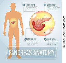 Vector pancreas infographics banner illustration. Medical ...