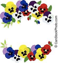 pansies - vector pansies floral background