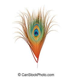 vector, peacock veer, vrijstaand, op wit, achtergrond