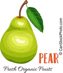 Vector pear illustration