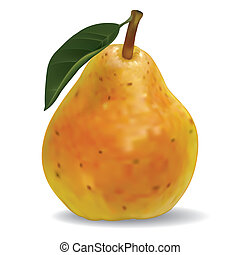 vector pear isolated on white background