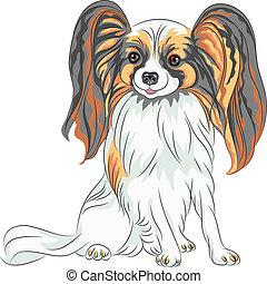 vector pedigreed dog Papillon breed - color sketch Papillon ...