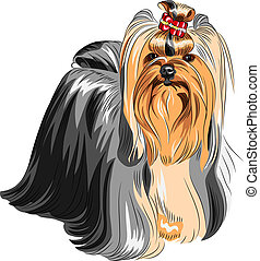 color sketch Yorkshire terrier red and black with elegant exhibition haircut