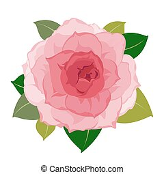 Vector detailed pink peony flower petals and leaves