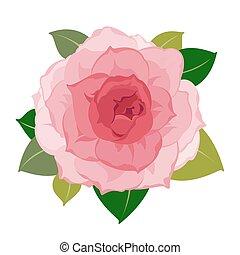 Vector peony flower closeup - Vector detailed pink peony...