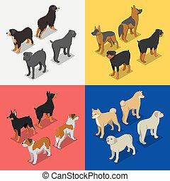 vector, perro cobrador, doberman., rottweiler, razas, perro, plano, isométrico, ilustración, 3d