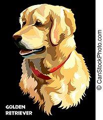 vector, perro cobrador dorado, colorido