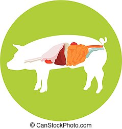Vector pig anatomy. digestive system.