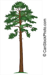 Vector illustration of tall pine-tree