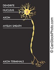 vector, plan, neuron