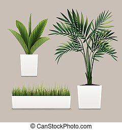 Vector plants potted in container for use indoors as...