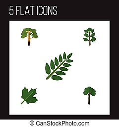vector, plat, ecologie, set, elements., oaken, blad, hout, ...