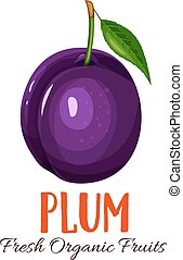 Vector plum illustration