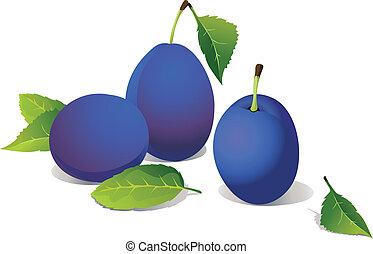 vector plums