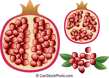 vector pomegranate with grains and leaves - vector...