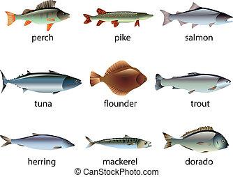 vector, popular, pez, conjunto, especie