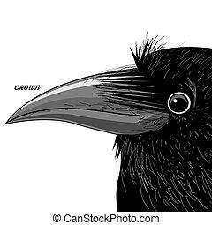 Vector portrait of a black raven