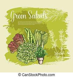 Vector poster of lettuce salads leafy vegetables - Salads...