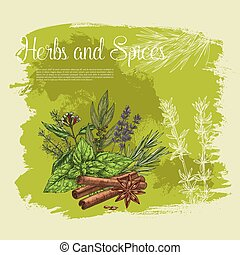 Vector poster of thyme spice, basil, rosemary herb